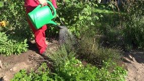 Τα χορτάρια ποτίσματος ατόμων στο φυτικό κήπο με το πράσινο πότισμα μπορούν, 4K φιλμ μικρού μήκους