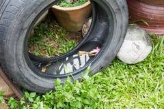 Τα χρησιμοποιημένα ελαστικά αυτοκινήτου αποθηκεύουν ενδεχομένως το στάσιμες νερό και τη φυλή κουνουπιών Στοκ Εικόνες