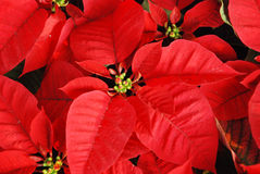 τα Χριστούγεννα ανασκόπη&sigm Στοκ φωτογραφία με δικαίωμα ελεύθερης χρήσης