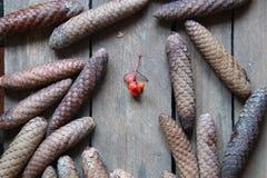 τα Χριστούγεννα διακοσμούν τις φρέσκες βασικές ιδέες διακοσμήσεων invitation new year Στοκ φωτογραφία με δικαίωμα ελεύθερης χρήσης