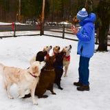 Τα Χριστούγεννα μεταχειρίζονται για τα σκυλιά Στοκ Εικόνα