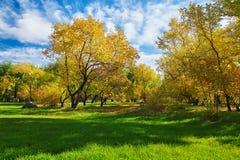 Τα χρυσά δέντρα και ο πράσινος χορτοτάπητας Στοκ εικόνα με δικαίωμα ελεύθερης χρήσης