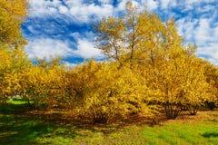 Τα χρυσά δέντρα και cloudscape Στοκ φωτογραφία με δικαίωμα ελεύθερης χρήσης