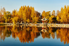Τα χρυσά δέντρα στο ηλιοβασίλεμα όχθεων της λίμνης στοκ φωτογραφία