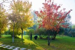 Τα χρυσά δέντρα φθινοπώρου και το ηλιοβασίλεμα ζευγών Στοκ φωτογραφία με δικαίωμα ελεύθερης χρήσης