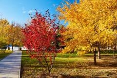 Τα χρυσά δέντρα φθινοπώρου και το ηλιοβασίλεμα πορειών Στοκ φωτογραφία με δικαίωμα ελεύθερης χρήσης
