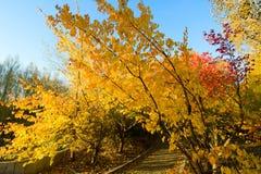 Τα χρυσά δέντρα στοκ εικόνα