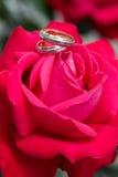 τα χρυσά ρόδινα δαχτυλίδι&al Στοκ Εικόνες