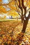 Τα χρυσά φύλλα Στοκ Εικόνα