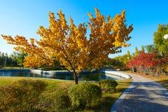 Τα χρυσές δέντρα και η πορεία στοκ φωτογραφία με δικαίωμα ελεύθερης χρήσης