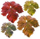 τα χρώματα διαφορετικά βγά Στοκ εικόνες με δικαίωμα ελεύθερης χρήσης