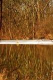 Τα χρώματα πτώσης απεικονίζονται σε μια λίμνη στη Ιντιάνα Στοκ φωτογραφίες με δικαίωμα ελεύθερης χρήσης