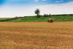 Τα χρώματα της ιταλικής επαρχίας το καλοκαίρι στοκ φωτογραφία με δικαίωμα ελεύθερης χρήσης
