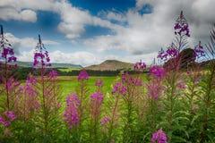 Τα χρώματα της Σκωτίας στοκ εικόνες