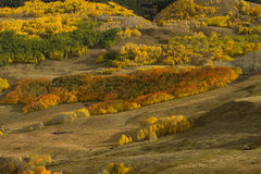 Τα χρώματα των δέντρων της Aspen Στοκ Εικόνα