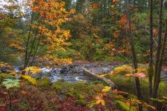 Τα χρώματα φθινοπώρου σε McKenzie πέρασμα-Santiam περνούν τη φυσική πάροδο στοκ εικόνα
