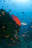 τα ψάρια αναφλέγουν Στοκ Φωτογραφίες