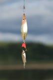 τα ψάρια γαντζώνουν λίγα Στοκ εικόνα με δικαίωμα ελεύθερης χρήσης