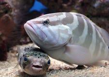τα ψάρια διευθύνουν το μ&omicro Στοκ Εικόνα
