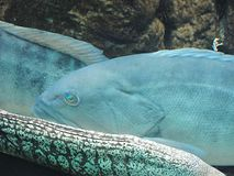 Τα ψάρια Ελλάδα Στοκ φωτογραφίες με δικαίωμα ελεύθερης χρήσης