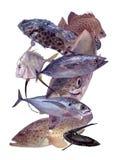 τα ψάρια θέτουν τροπικός Στοκ φωτογραφία με δικαίωμα ελεύθερης χρήσης