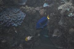 Τα ψάρια κολυμπούν στη Ερυθρά Θάλασσα στοκ φωτογραφίες με δικαίωμα ελεύθερης χρήσης