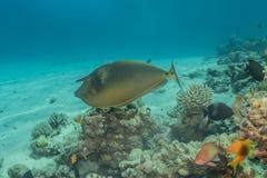 Τα ψάρια κολυμπούν στη Ερυθρά Θάλασσα στοκ εικόνα