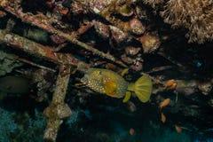 Τα ψάρια κολυμπούν στη Ερυθρά Θάλασσα στοκ εικόνες με δικαίωμα ελεύθερης χρήσης