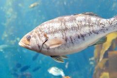 Τα ψάρια κλείνουν επάνω Στοκ Εικόνες