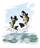 Τα ψάρια πηδούν έξω από το νερό μετά από μια λιβελλούλη Στοκ Εικόνα