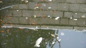 Τα ψάρια στο βρώμικο νερό, μολύνουν το περιβάλλον, αντανάκλαση φιλμ μικρού μήκους