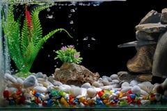 Τα ψάρια τοποθετούν σε δεξαμενή το ντεκόρ, με το αμμοχάλικο και το δέντρο, με τις φυσαλίδες στο μαύρο σκηνικό στοκ εικόνα