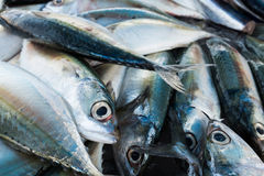 Τα ψάρια Στοκ Εικόνες