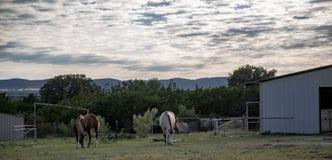 Τα όμορφα άλογα βόσκουν το λιβάδι χώρας Hill στοκ εικόνα