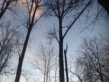 Τα όμορφα δέντρα Στοκ φωτογραφία με δικαίωμα ελεύθερης χρήσης
