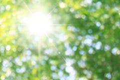 Τα όμορφα ακτινοβολώντας πράσινα υπόβαθρα με την ηλιοφάνεια που ανάβει την πράσινη επίδραση bokeh φύσης δασική στην εικόνα πράσιν Στοκ φωτογραφίες με δικαίωμα ελεύθερης χρήσης