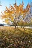 Τα όμορφα δέντρα στην ανατολή πάρκων Στοκ φωτογραφία με δικαίωμα ελεύθερης χρήσης