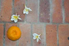 Τα όμορφα λουλούδια έπεσαν στο έδαφος Στοκ εικόνες με δικαίωμα ελεύθερης χρήσης