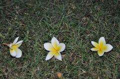 Τα όμορφα λουλούδια έπεσαν στο έδαφος Στοκ Εικόνα