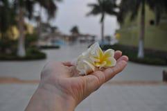 Τα όμορφα λουλούδια έπεσαν στο έδαφος Στοκ φωτογραφία με δικαίωμα ελεύθερης χρήσης