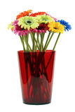 τα όμορφα λουλούδια ανα&p Στοκ φωτογραφία με δικαίωμα ελεύθερης χρήσης