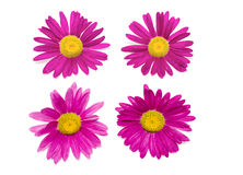 τα όμορφα λουλούδια απο Στοκ φωτογραφίες με δικαίωμα ελεύθερης χρήσης