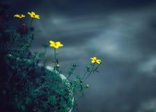 Τα όμορφα ονειροπόλα μαγικά κίτρινα λουλούδια νεράιδων με τα σκούρο πράσινο φύλλα μέσα Στοκ Φωτογραφία