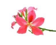 τα όμορφα λουλούδια ανα&s Στοκ εικόνα με δικαίωμα ελεύθερης χρήσης