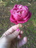 Τα όμορφα λουλούδια μου Στοκ Φωτογραφίες