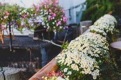 Τα όμορφα λουλούδια στην πόλη Στοκ Φωτογραφίες
