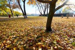 Τα όμορφα πεσμένα φύλλα στην ανατολή πάρκων Στοκ Φωτογραφία
