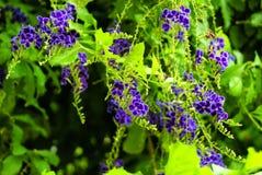Τα όμορφα πορφυρά λουλούδια στοκ εικόνα με δικαίωμα ελεύθερης χρήσης