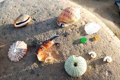 Τα όμορφα πράγματα παίρνουν πλυμένα επάνω τις παραλίες Στοκ Φωτογραφία