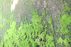 Τα όμορφα πράσινα φύλλα διακοσμούν τους τοίχους Υπόβαθρο στοκ φωτογραφία με δικαίωμα ελεύθερης χρήσης